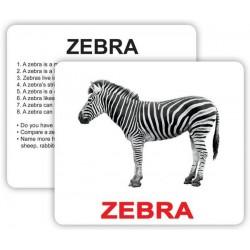 Карточки большие английские «Wild animals with facts» ламинированные 30шт, инструкция на украинском языке, в пак.16*13см, ТМ Вундеркинд с пел
